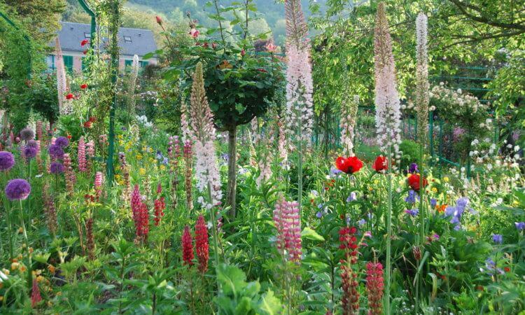 Le jardin de fleurs de Monet